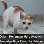 Kasihani Kucing Terbiar Seperti Papa Hero