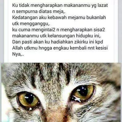 kucing tercantik